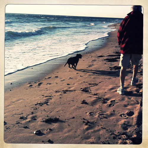 Man and dog walking along beach